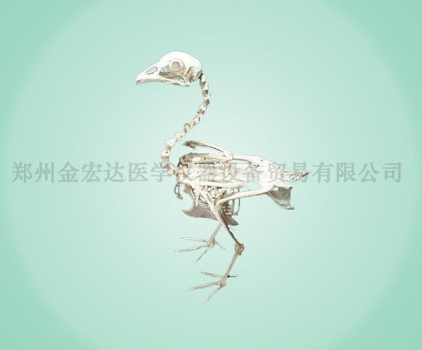 畜牧器械_产品管理|金宏达医学仪器设备贸易有限公司